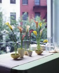 Indoor Plants Arrangement Ideas by Floral Arrangement Ideas Martha Stewart
