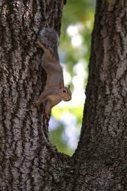 How To Hunt Squirrels In Your Backyard by Joys Of Squirrel Hunting In Alabama Often Overlooked Al Com