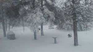 Tree Event Nws Snowstorm Breaks Appleton S All Time Record For Largest Snow Event