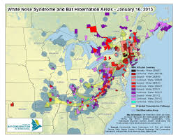 Mammoth Map White Nose Syndrome Hits The Bats Of Mammoth Cave National Park