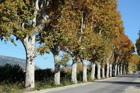growing trees u0026 shrubs