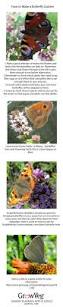 native plants for butterflies 16 best butterflies and host plant information images on pinterest
