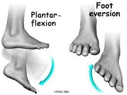 Foot Ligament Anatomy Peroneal Tendon Subluxation Eorthopod Com