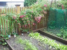 Home Vegetable Gardens by Home Vegetable Garden Fence Decorating Clear