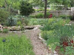 north texas native plants the living garden gardening know how u0027s blog
