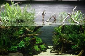 Aquascape Design The Passing Of Aquascaping Legend Takashi Amano
