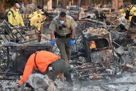 California Wildfire Animal Rescue by At Least 36 Killed In Northern California Wildfires U0027ashes And