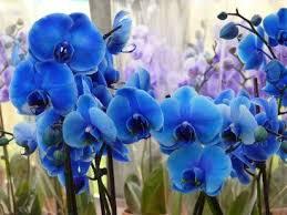 Blue Orchid Flower Les 25 Meilleures Idées De La Catégorie Types Of Orchids Sur