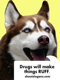 Meme Slogans - 100 best anti drug slogans posters and quotes