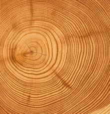 arctic study sheds light on tree ring divergence problem changes