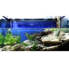 only for the ambitious the jbl biotope aquarium design contest 2014