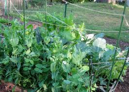 square foot gardening flowers projects u2013 square foot garden update u2013 minding my p u0027s with q