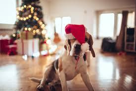 impress your pet top pet presents this season billings