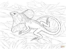 realistic frill necked lizard for coloring pages animal