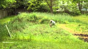 rolling a garden cover crop youtube