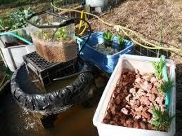 104 best aquaponics images on hydroponics aquaponics