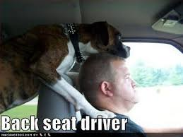 boxer dog funny 96 best puppy love images on pinterest boxer love animals and