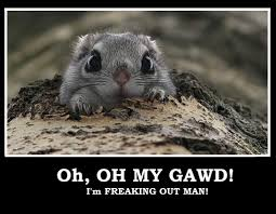 Rodent Meme - squrrel meme i m freaking out man by phoenix wing art on deviantart
