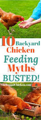 4166 best backyard chickens care u0026 health images on pinterest