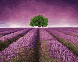 popular lavender trees buy cheap lavender trees lots from china