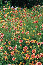native plants southern california drought tolerant plants southern living