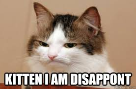 Unimpressed Meme - unimpressed kitten meme kitten best of the funny meme