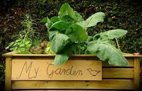 free photo garden raised bed bed plant free image on pixabay