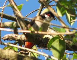 birds in the news archives trevor u0027s birding trevor u0027s birding
