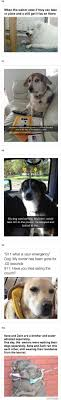 Dog Owner Meme - 10 funny dog memes dog owners share hilarious snapchat of dogs