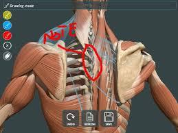 Visual Anatomy And Physiology Pdf Visual Human Anatomy