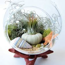 46 great air plant terrariums ideas for your stunning home air
