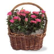 flower delivery baltimore new year flower delivery baltimore md starting at just 42 95