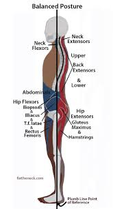 Diagram Of Knee Anatomy 362 Best Nasm Images On Pinterest Physical Therapy Massage