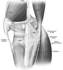 ligaments of the knee knee u0026 sports orthobullets