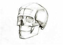 sketch of human skull