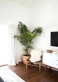apartment plants plant living room best living room plants ideas on apartment