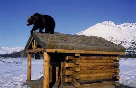 Alaska wildlife images Alaska wildlife conservation center portage jpg