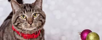black friday pet adoption home for the pawlidayz pet adoptions