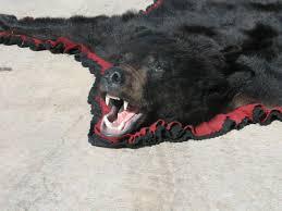 Taxidermy Bear Rug Taxidermy Rugs For Sale Black Bear Grizzly Bear Coyote Fox