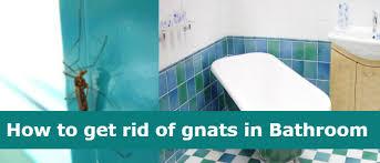 Ammonia Smell In Bathroom Gnats In Bathroom How To Get Rid Of Gnats In Bathroom