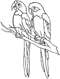 free printable parrot coloring pages kids