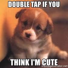 Double Picture Meme Generator - double tap if you think i m cute cute puppy meme generator