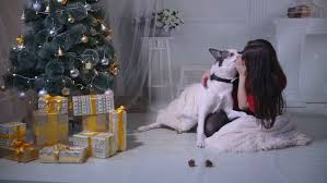 Dogs Decorating Christmas Tree Video by Laughing Young Woman With Her Dog At Christmas Sitting Together On
