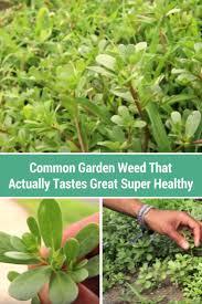 best 25 common garden weeds ideas on pinterest garden weeds