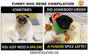 Funny Dogs Memes - try not to laugh at this funny dog meme compilation video talent