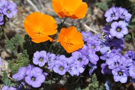 native plant seed native plants for ecology and horticulture ecological landscape