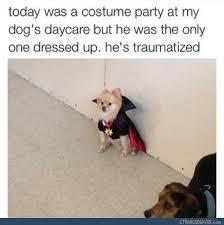 Funny Animal Memes Tumblr - funny tumblr post random humor pinterest animal random and humour