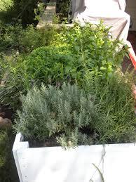 creating a spring herb garden