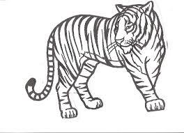Modern Design Tiger Pictures To Color Excellent Coloring Pages Top Coloring Pages Tiger