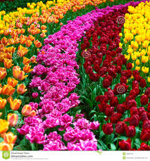 garden design garden design with flowers garden hd wallpapers hd garden design with tulip flowers garden in spring background or pattern stock image with landscaping design